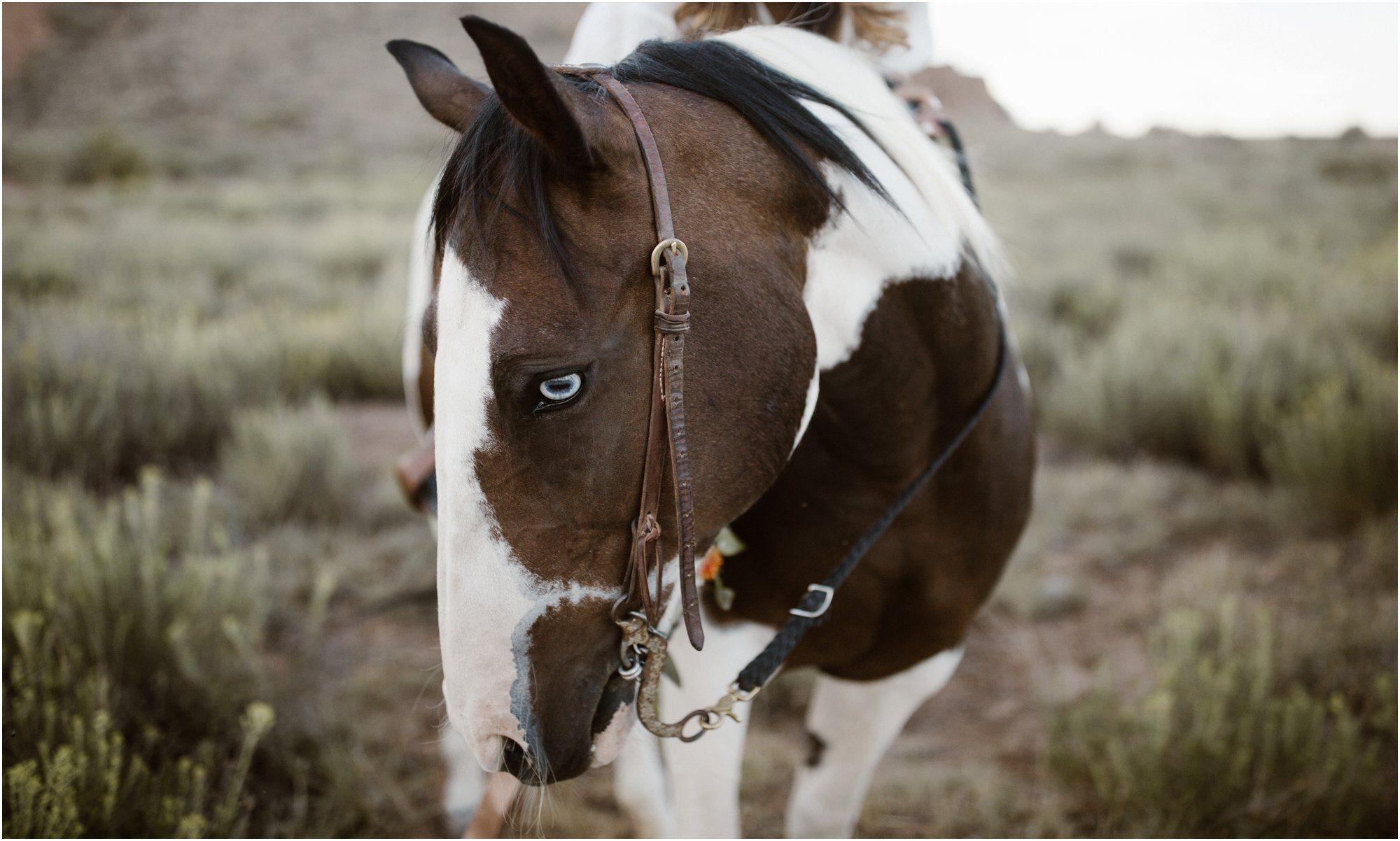 029Blue Rose Photography_ Albuquerque Portrait Photographer_ Fine Art Portraits_ Santa Fe Photographer