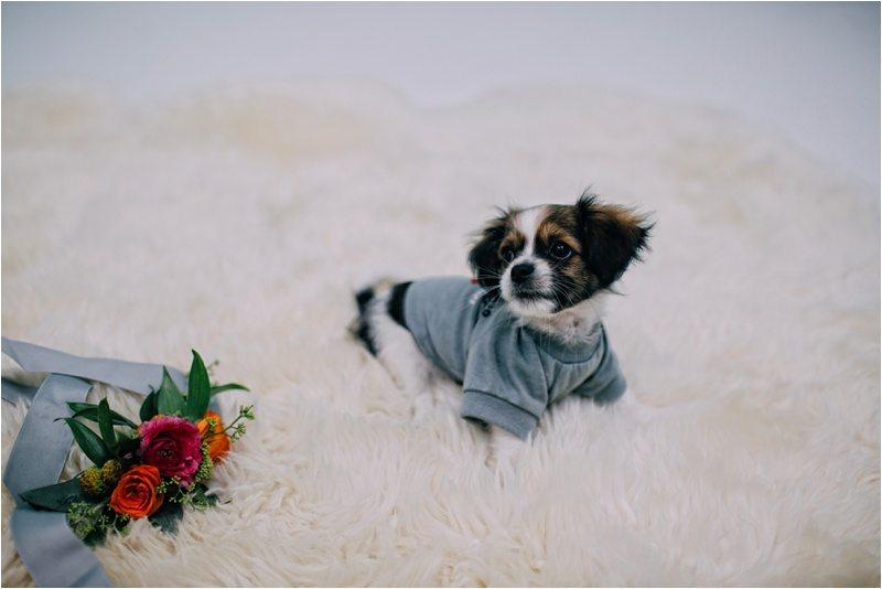 05Albuquerque-Photographer_Blue-Rose-Studio_Santa-Fe-Photographer_Pet-Photography-New-Mexico