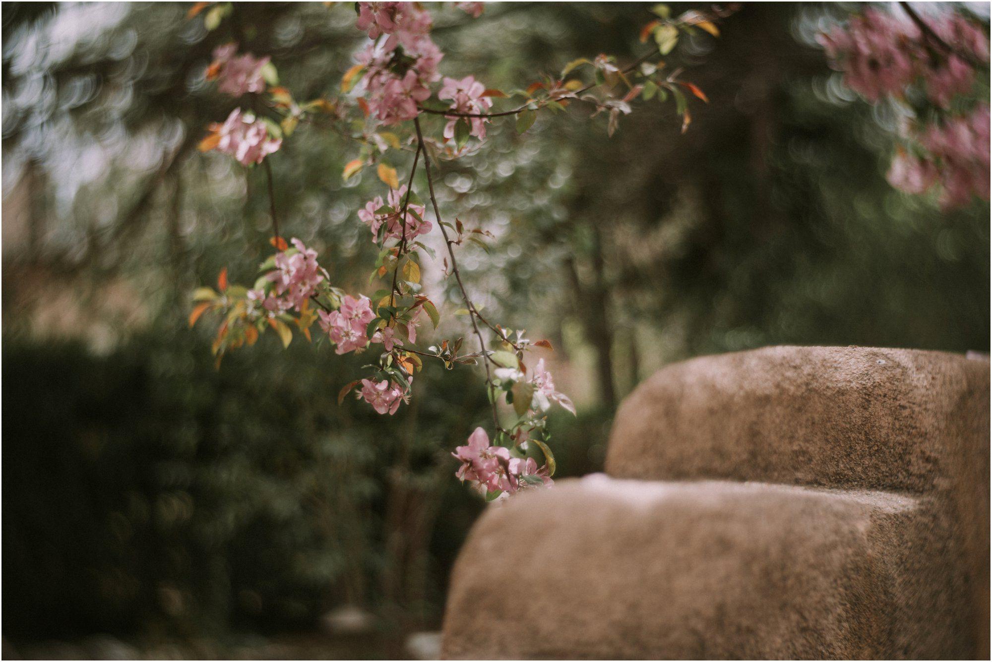 05Blue Rose Photography