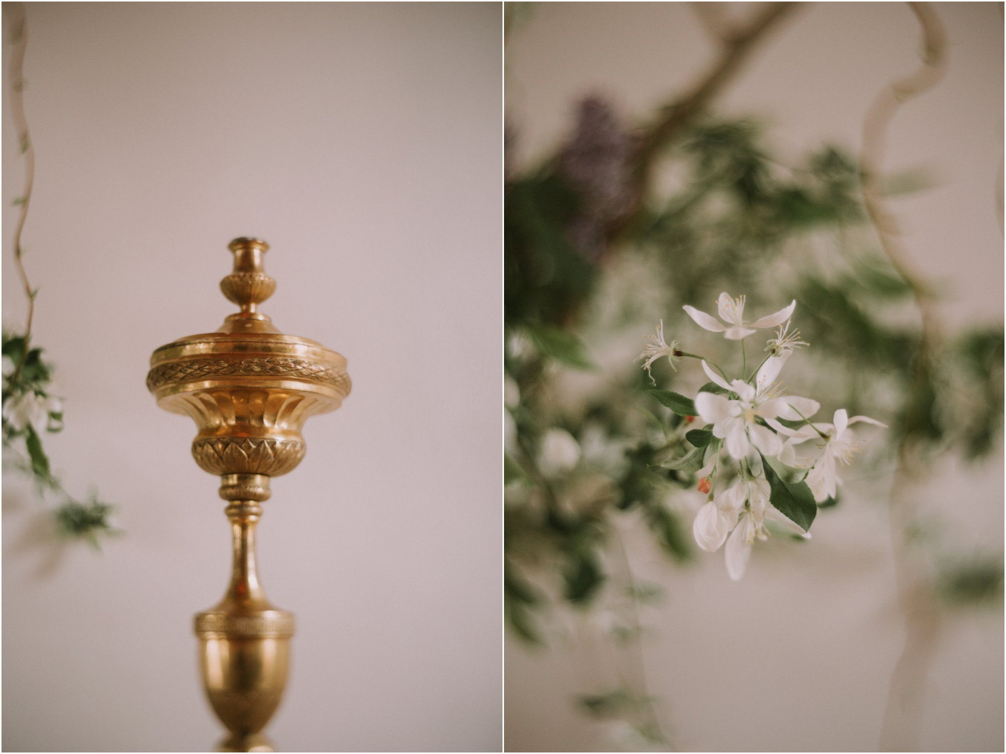 11Blue Rose Photography