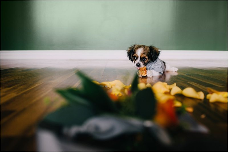 12Albuquerque-Photographer_Blue-Rose-Studio_Santa-Fe-Photographer_Pet-Photography-New-Mexico