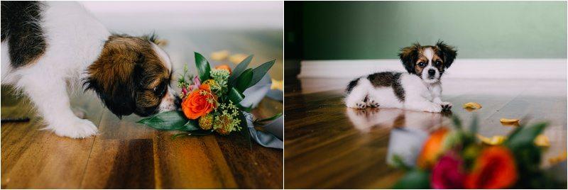 14Albuquerque-Photographer_Blue-Rose-Studio_Santa-Fe-Photographer_Pet-Photography-New-Mexico