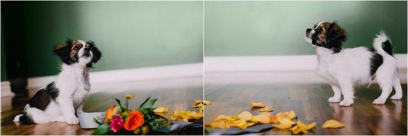 19Albuquerque-Photographer_Blue-Rose-Studio_Santa-Fe-Photographer_Pet-Photography-New-Mexico