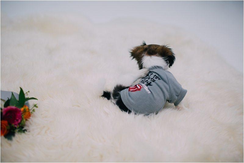 04Albuquerque-Photographer_Blue-Rose-Studio_Santa-Fe-Photographer_Pet-Photography-New-Mexico